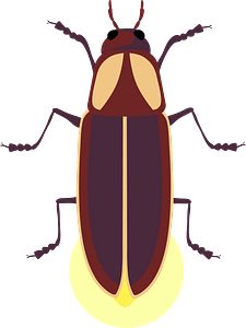 Firefly clipart