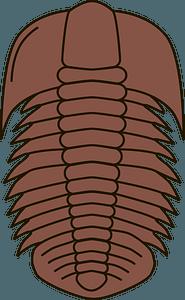 Trilobite fossil clipart