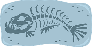 Fish fossil clipart