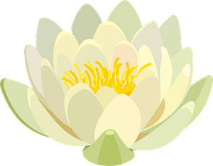 Water lily clipart