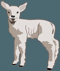 Young lamb clipart