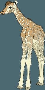 Baby giraffe 클립 아트