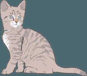 Gray kitten clipart