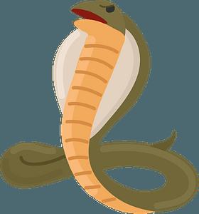Cobra clipart