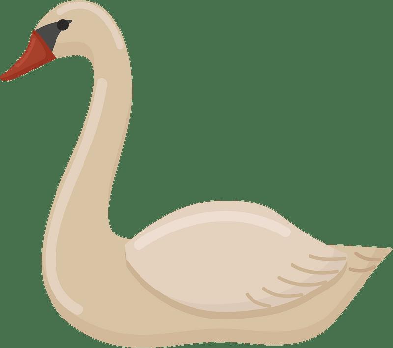 Swan clipart