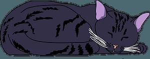 Cat sleeping clipart