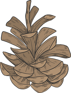 Pine cone clipart