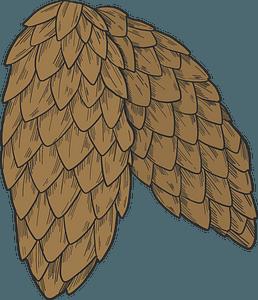 Pine cones clipart