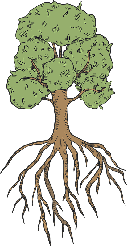 Tree with roots clipart. Free download transparent .PNG ...