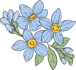 Forget-me-not flowers clipart