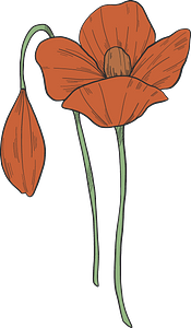 Poppy flowers clipart