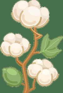 Cotton clipart