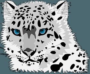 Snow leopard 클립 아트