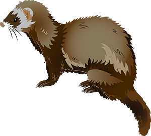 Steppe polecat clipart