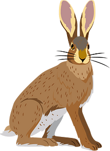Hispid hare clipart