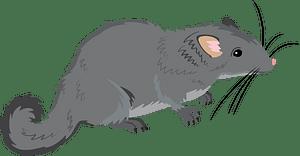 Laotian rock rat clipart
