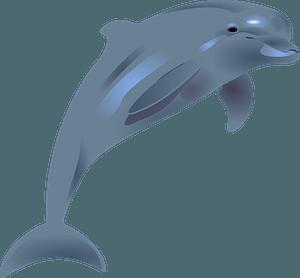 Bottlenose dolphin clipart