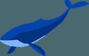 Blue Whale 클립 아트