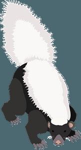 American hog-nosed skunk clipart