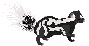 Eastern spotted skunk clipart