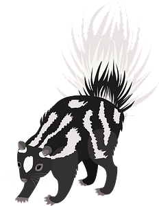 Western spotted skunk clipart