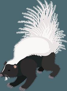 Hooded skunk clipart