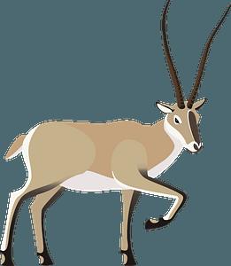 Tibetan antelope clipart