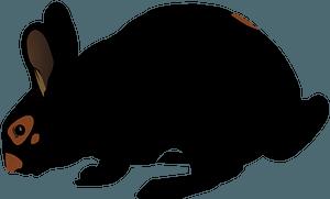 Black rabbit clipart