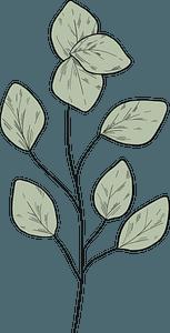 Eucalyptus branch clipart