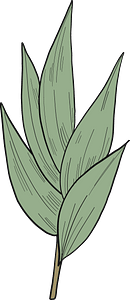 Eucalyptus leaves clipart