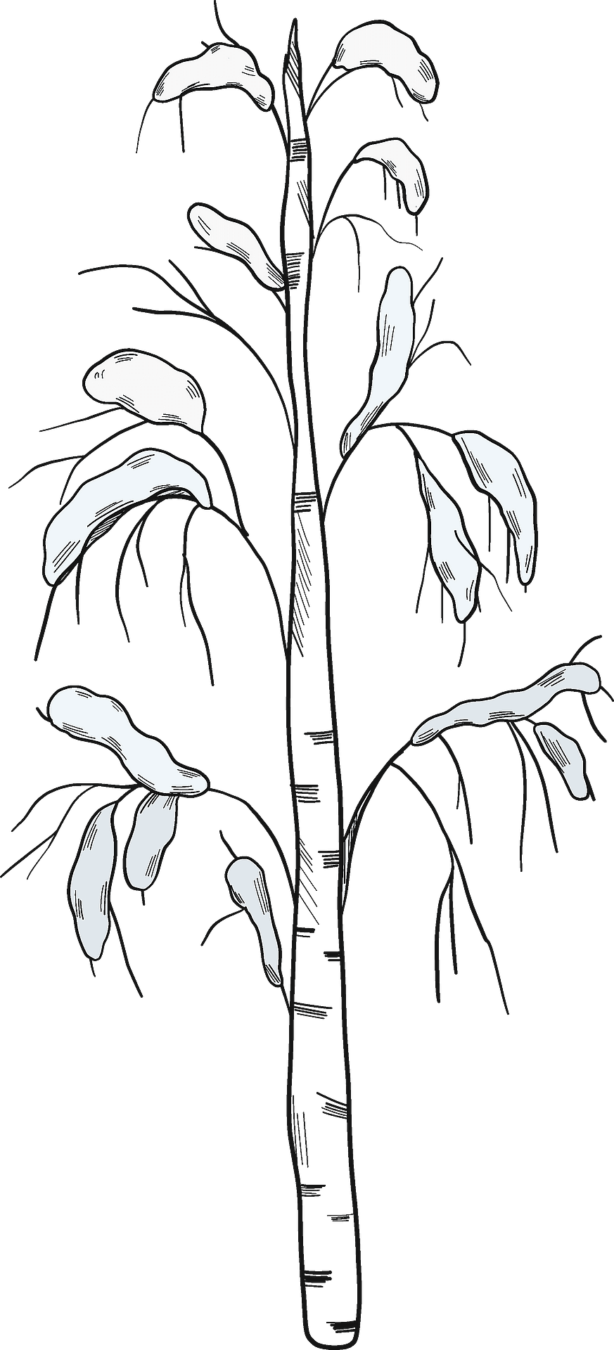 Winter Tree Easy Drawing Clipart (#5613322) - PinClipart
