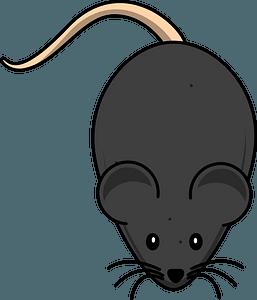Cartoon black mouse clipart