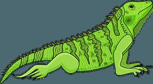 Iguanaのクリップアート