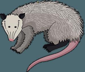 Possum clipart