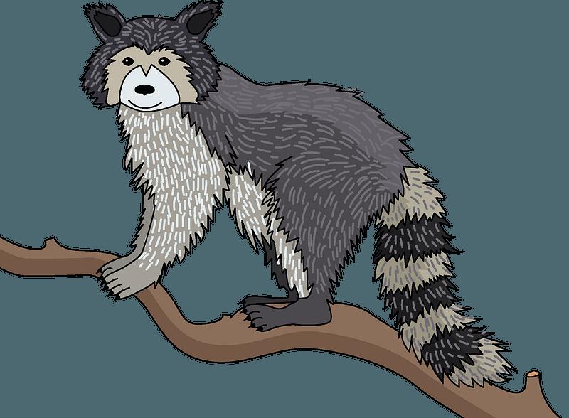 Raccoon clipart
