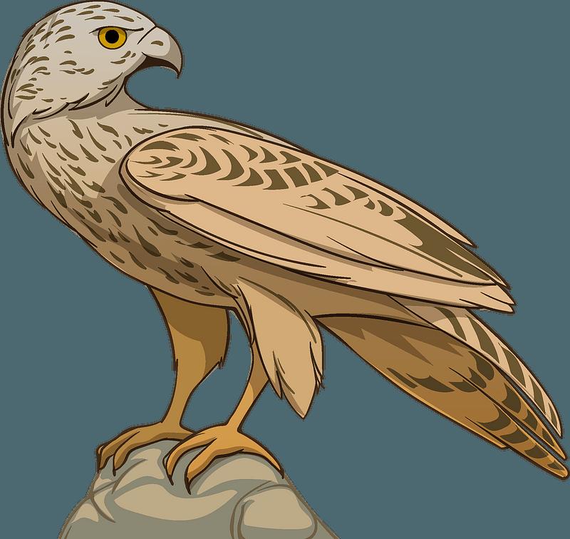 Hawk clipart