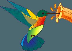 Hummingbird clipart