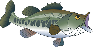 Largemouth bass clipart