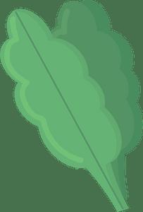 Spinachのクリップアート
