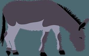 Wild donkey clipart