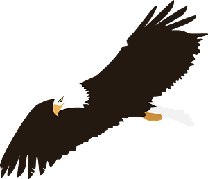 Bald eagle in flight clipart