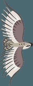 Golden eagle in flight clipart