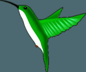Green hummingbird clipart