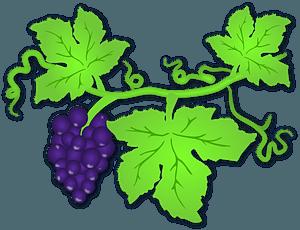 Purple Grapes on the Vine clipart