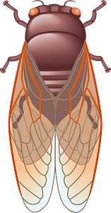 Cicada Insect clipart