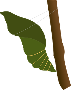 Pupa Insect clipart