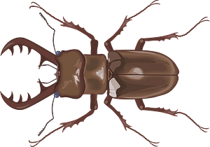Stag Beetle Insect clipart