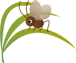 Bell Ring Cricket Insect clipart