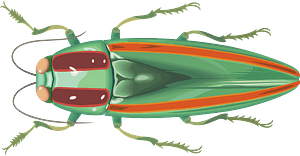 Jewel Beetle Insect clipart