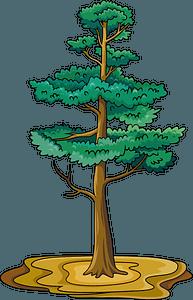Pine tree 클립 아트